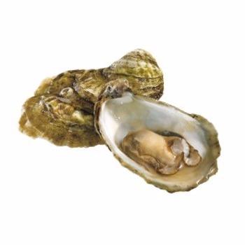 comprar-ostra-gallega-joaquin-farinas-gigante